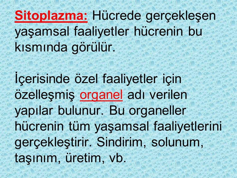 Sitoplazma: Hücrede gerçekleşen yaşamsal faaliyetler hücrenin bu kısmında görülür.