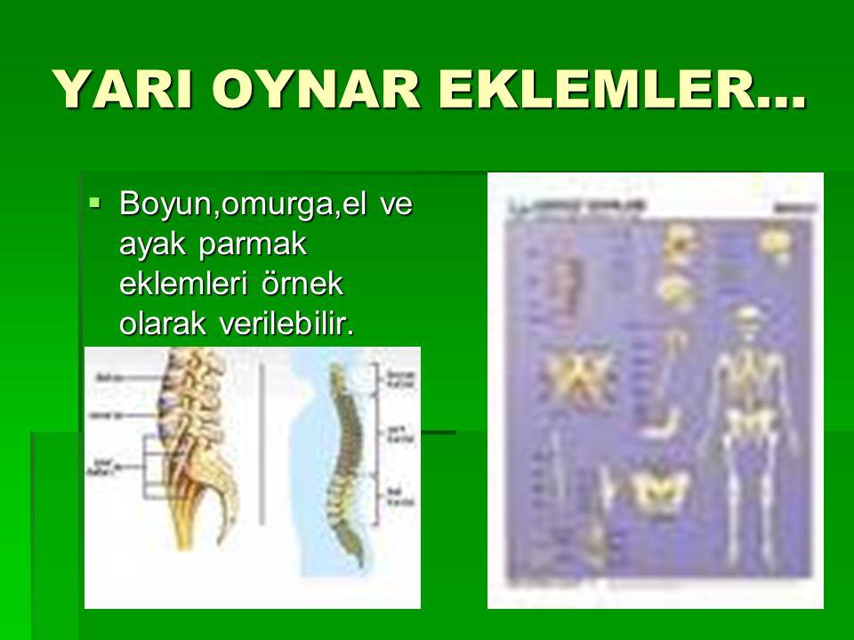 YARI OYNAR EKLEMLER… Boyun,omurga,el ve ayak parmak eklemleri örnek olarak verilebilir.