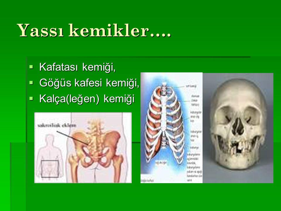 Yassı kemikler…. Kafatası kemiği, Göğüs kafesi kemiği,
