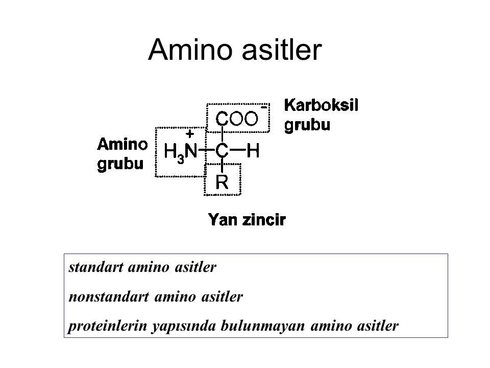 Amino asitler standart amino asitler nonstandart amino asitler