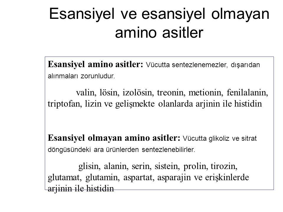 Esansiyel ve esansiyel olmayan amino asitler