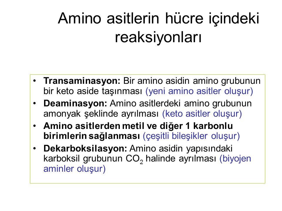 Amino asitlerin hücre içindeki reaksiyonları