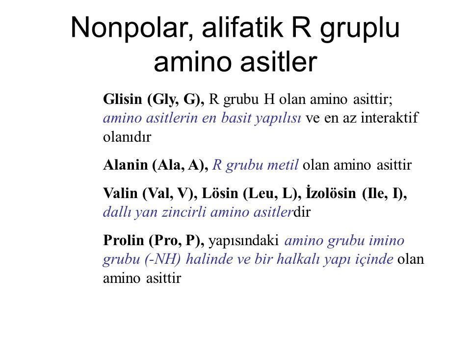 Nonpolar, alifatik R gruplu amino asitler