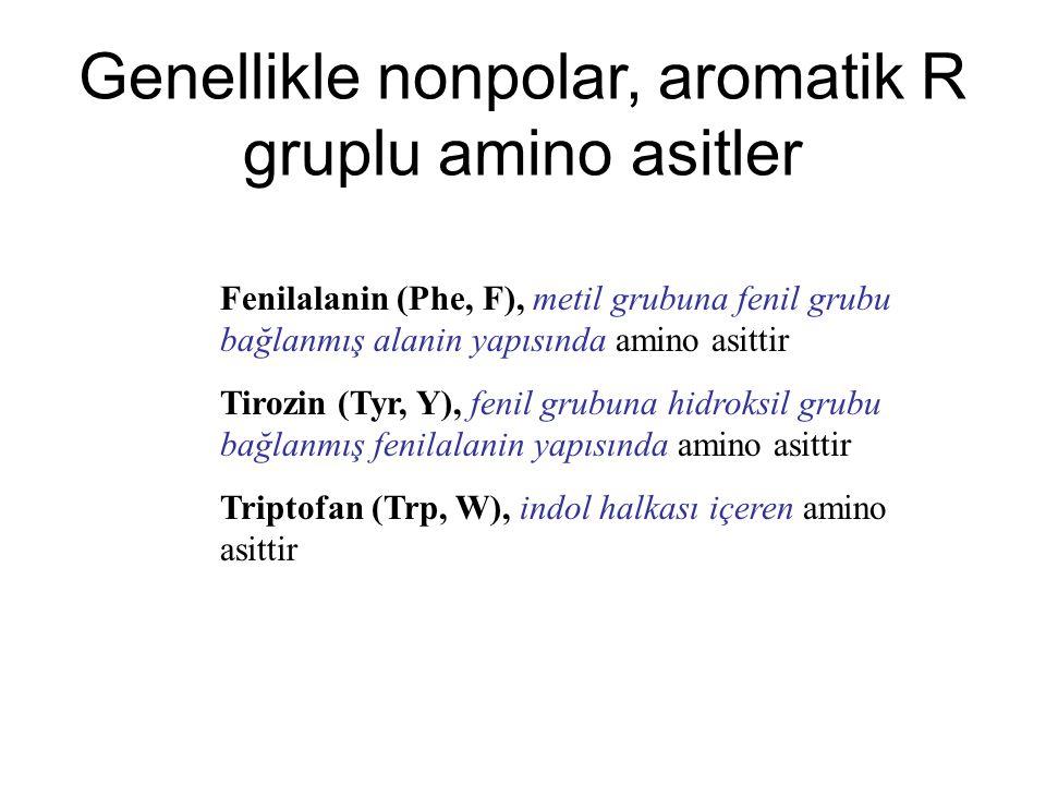 Genellikle nonpolar, aromatik R gruplu amino asitler