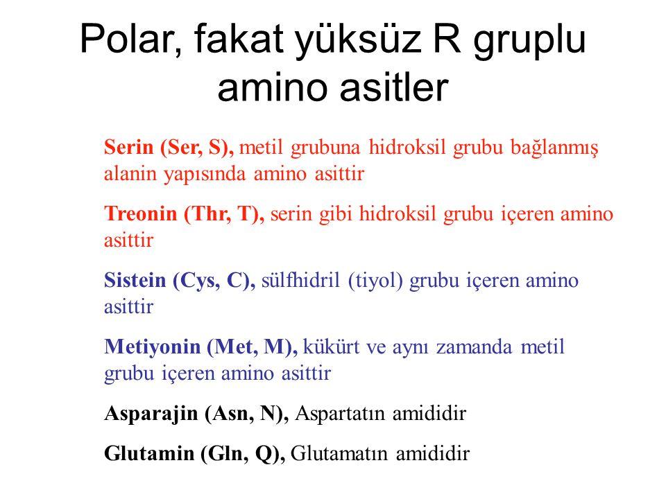 Polar, fakat yüksüz R gruplu amino asitler