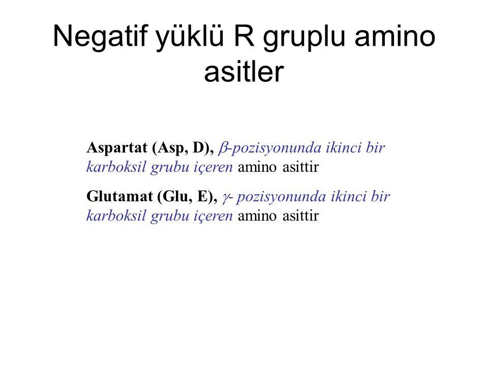 Negatif yüklü R gruplu amino asitler
