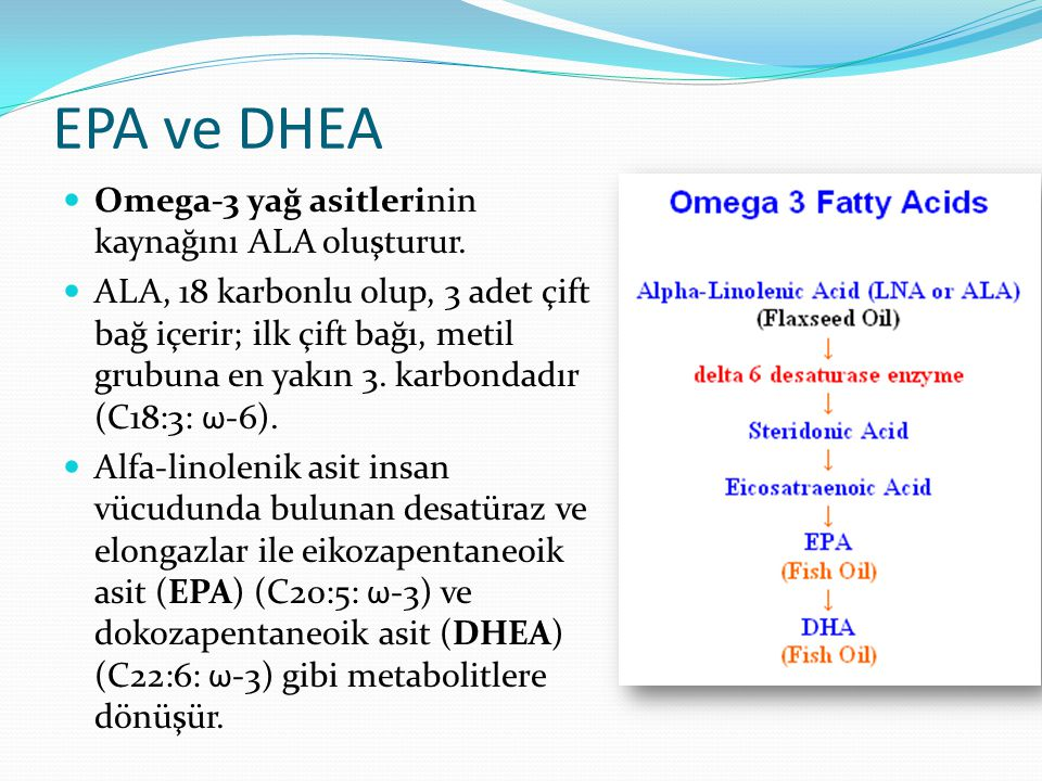 EPA ve DHEA Omega-3 yağ asitlerinin kaynağını ALA oluşturur.
