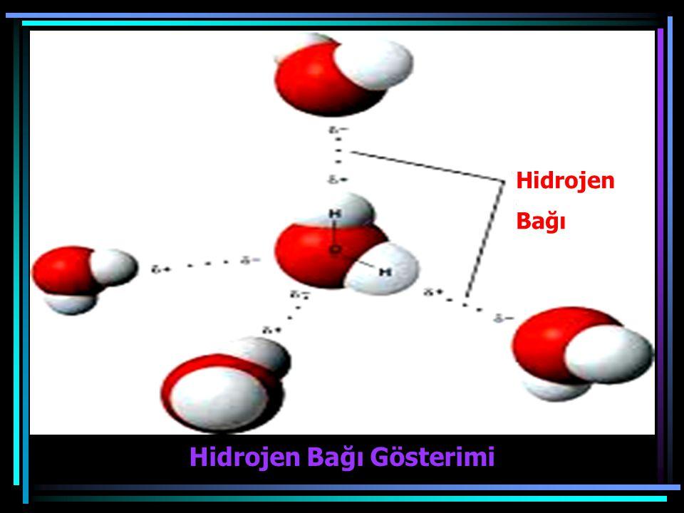 Hidrojen Bağı Gösterimi