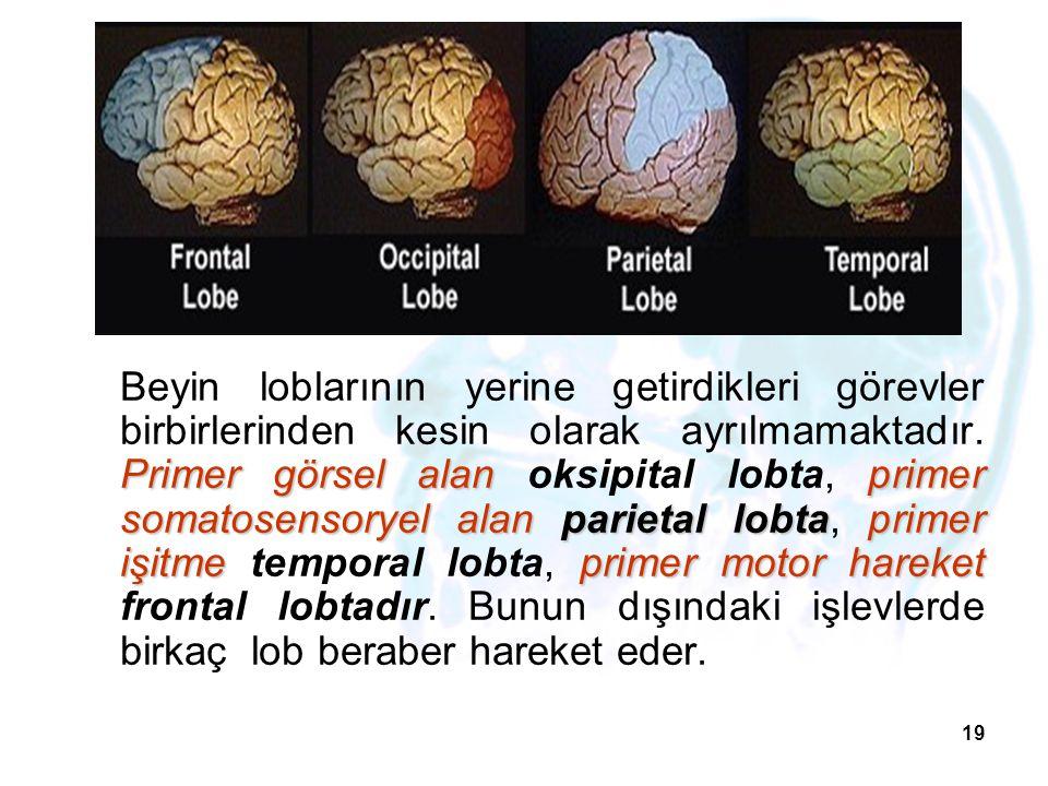 Beyin loblarının yerine getirdikleri görevler birbirlerinden kesin olarak ayrılmamaktadır.