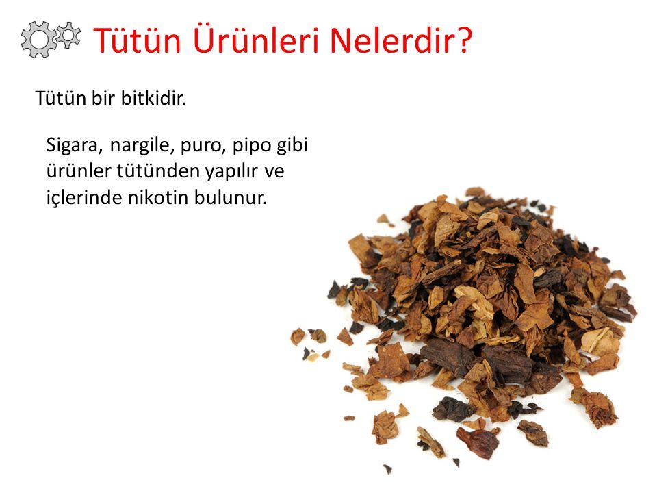 Tütün Ürünleri Nelerdir