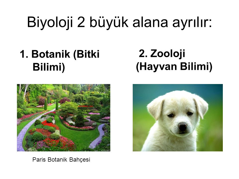 Biyoloji 2 büyük alana ayrılır: