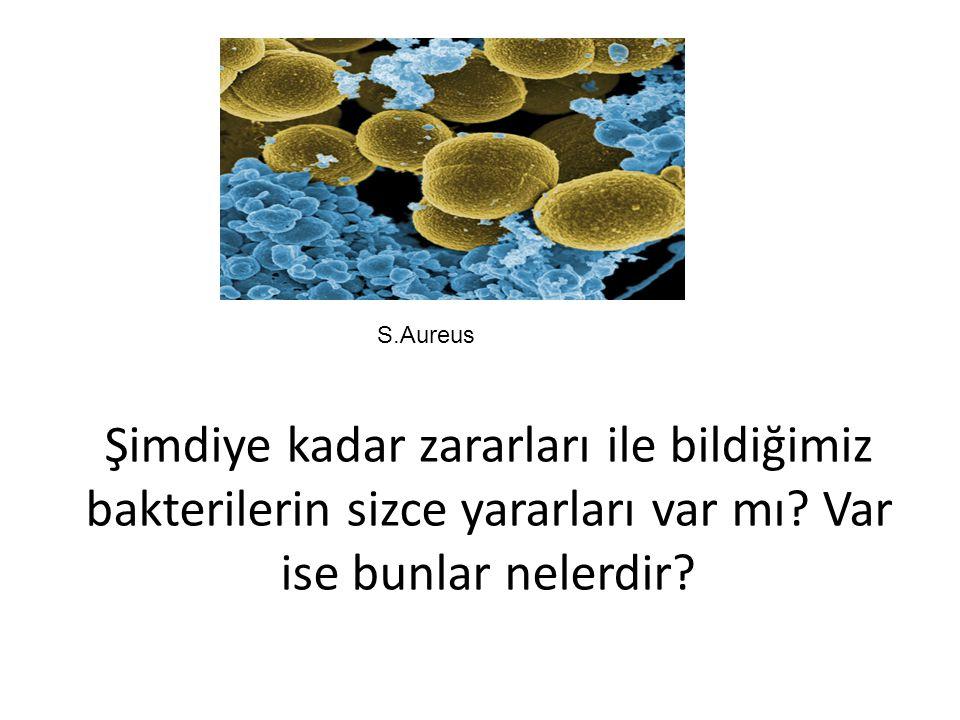 S.Aureus Şimdiye kadar zararları ile bildiğimiz bakterilerin sizce yararları var mı.