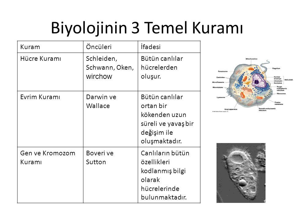 Biyolojinin 3 Temel Kuramı
