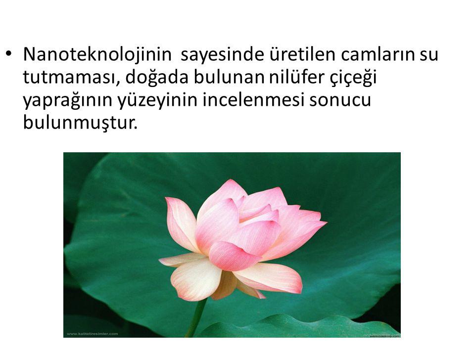 Nanoteknolojinin sayesinde üretilen camların su tutmaması, doğada bulunan nilüfer çiçeği yaprağının yüzeyinin incelenmesi sonucu bulunmuştur.