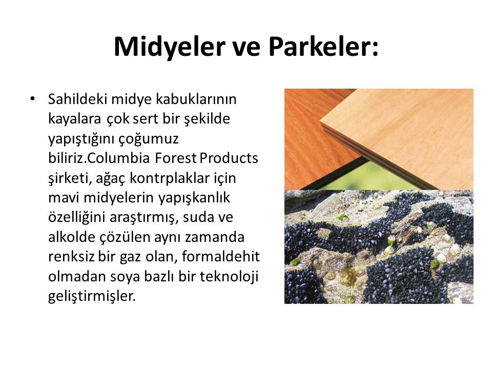 Midyeler ve Parkeler: