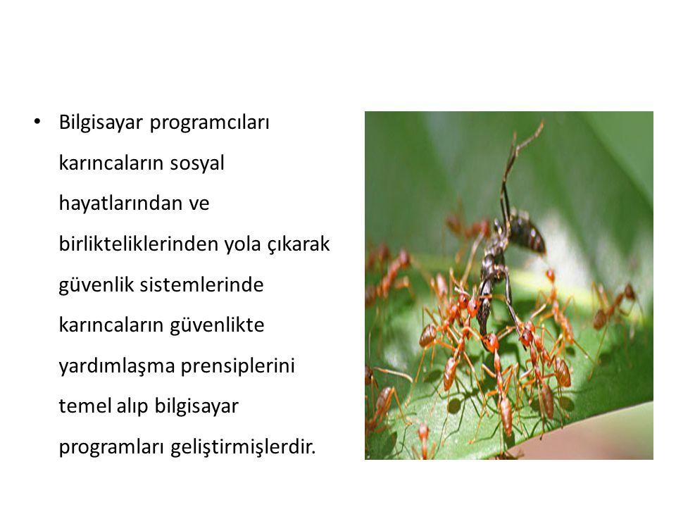 Bilgisayar programcıları karıncaların sosyal hayatlarından ve birlikteliklerinden yola çıkarak güvenlik sistemlerinde karıncaların güvenlikte yardımlaşma prensiplerini temel alıp bilgisayar programları geliştirmişlerdir.
