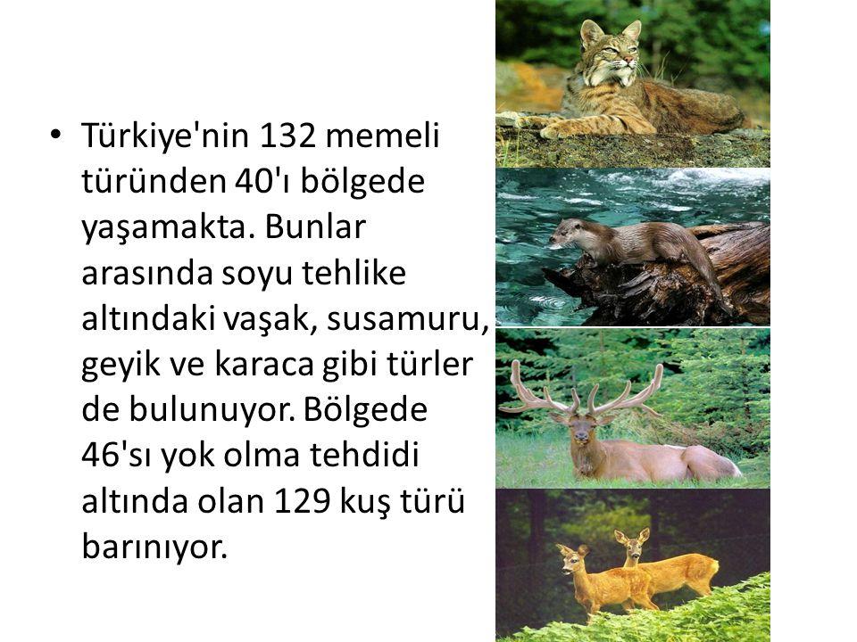 Türkiye nin 132 memeli türünden 40 ı bölgede yaşamakta