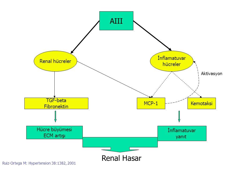 AIII Renal Hasar Renal hücreler İnflamatuvar hücreler TGF-beta