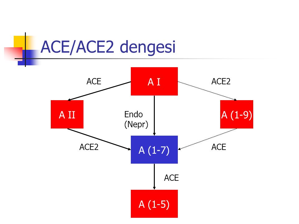 ACE/ACE2 dengesi A I A II A (1-9) A (1-7) A (1-5) ACE ACE2 Endo (Nepr)