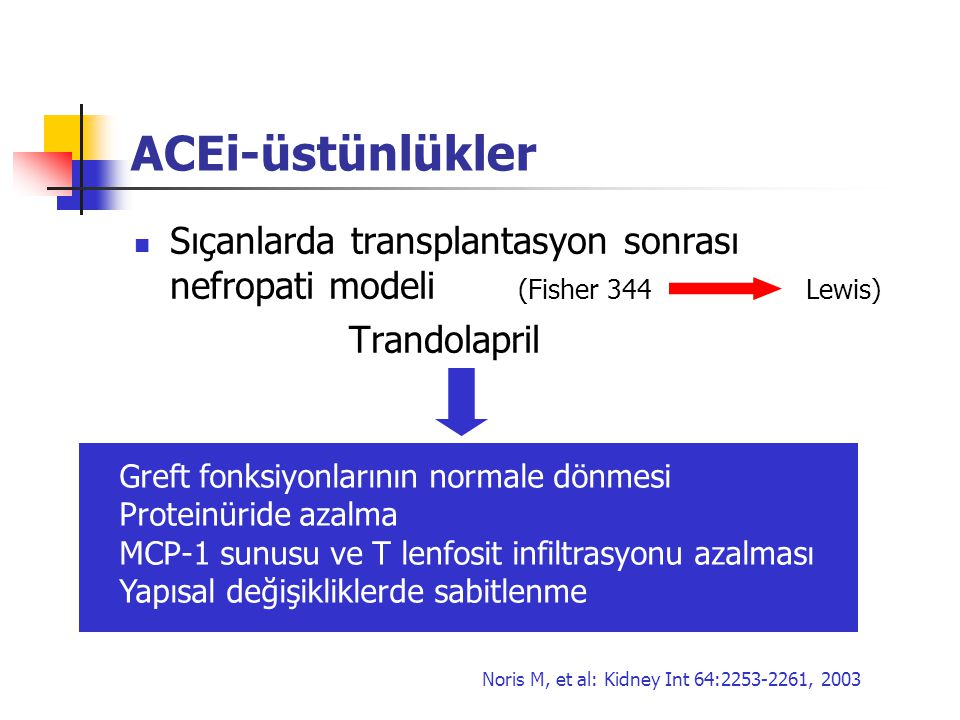 ACEi-üstünlükler Sıçanlarda transplantasyon sonrası nefropati modeli (Fisher 344 Lewis) Trandolapril.