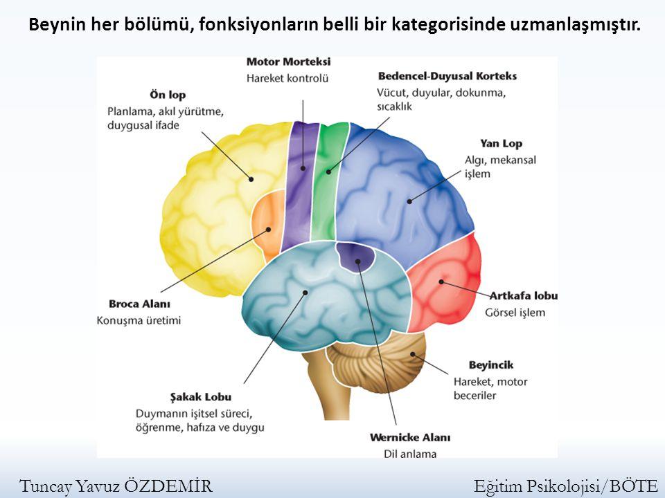 Beynin her bölümü, fonksiyonların belli bir kategorisinde uzmanlaşmıştır.