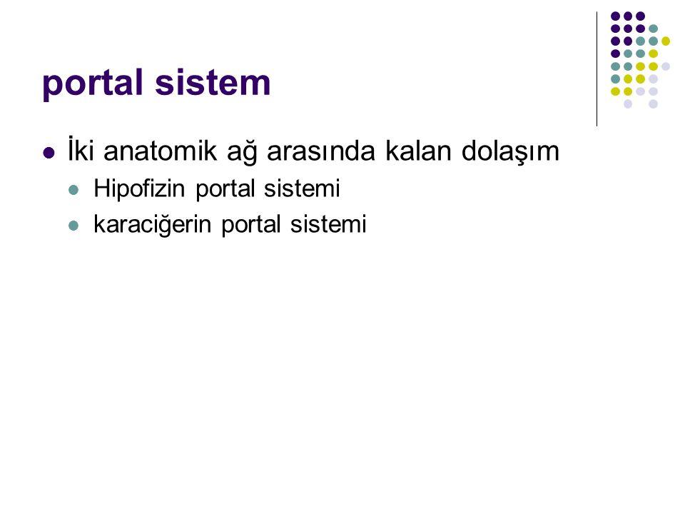 portal sistem İki anatomik ağ arasında kalan dolaşım