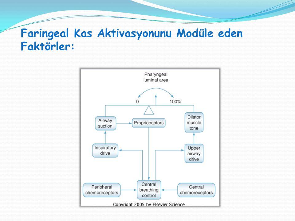 Faringeal Kas Aktivasyonunu Modüle eden Faktörler: