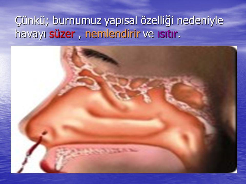 Çünkü; burnumuz yapısal özelliği nedeniyle havayı süzer , nemlendirir ve ısıtır.