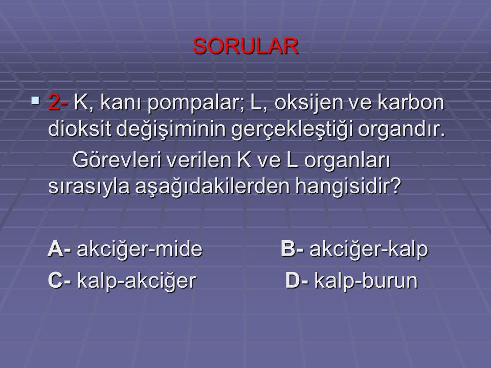 SORULAR 2- K, kanı pompalar; L, oksijen ve karbon dioksit değişiminin gerçekleştiği organdır.