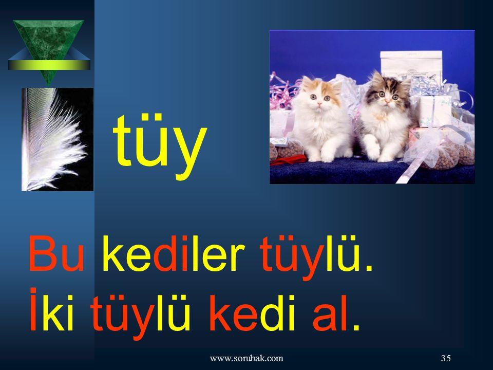 tüy Bu kediler tüylü. İki tüylü kedi al. www.sorubak.com