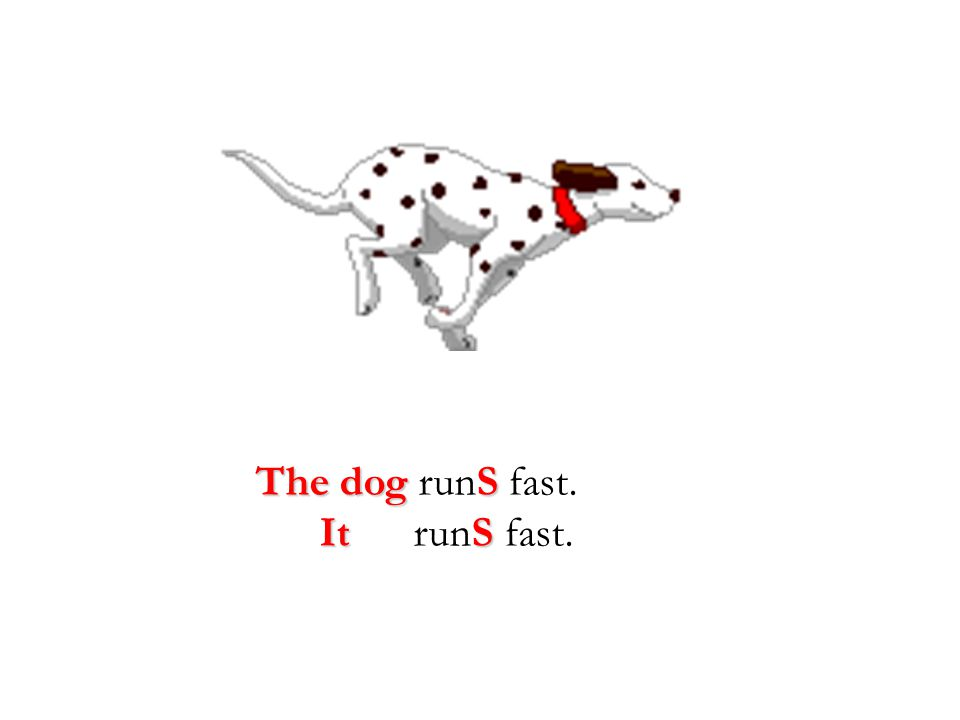 The dog runS fast. It runS fast.