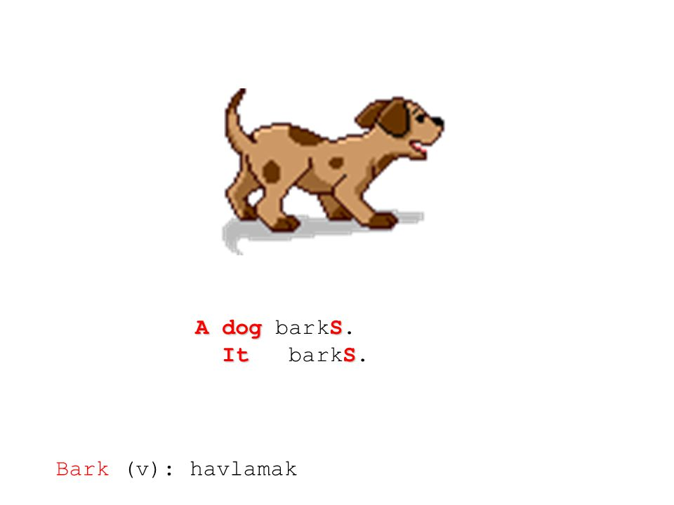 A dog barkS. It barkS. Bark (v): havlamak
