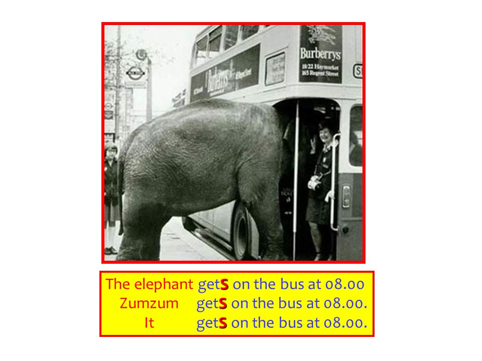 The elephant getS on the bus at 08.00