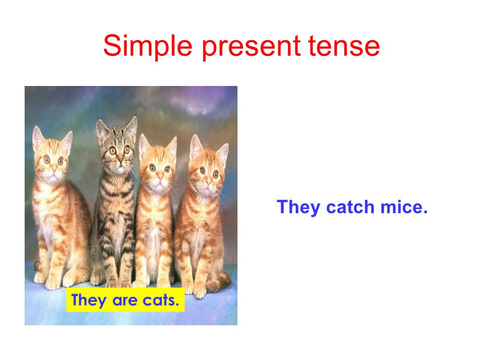 Simple present tense They catch mice. They are cats.