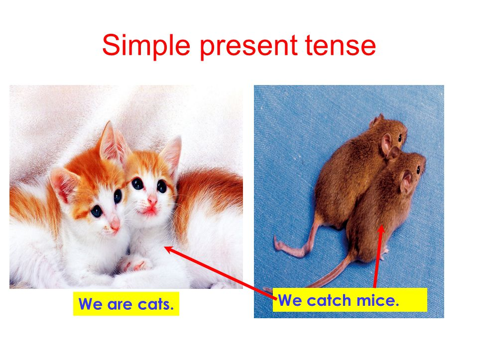 Simple present tense We catch mice. We are cats.