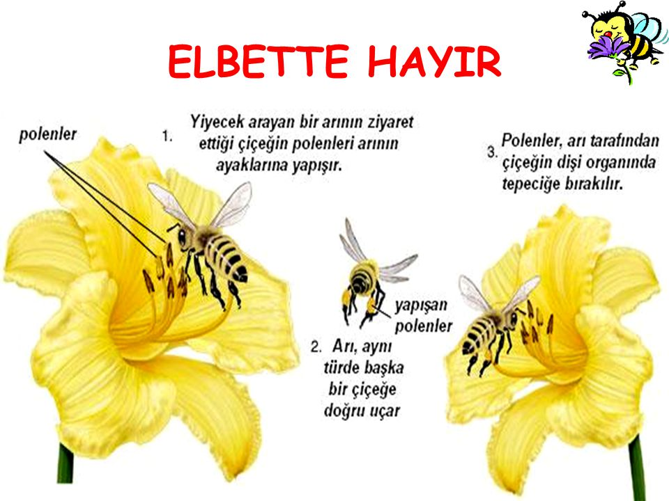 ELBETTE HAYIR