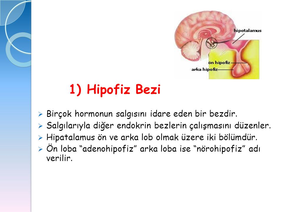 1) Hipofiz Bezi Birçok hormonun salgısını idare eden bir bezdir.