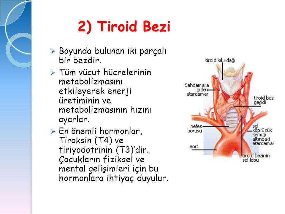 2) Tiroid Bezi Boyunda bulunan iki parçalı bir bezdir.