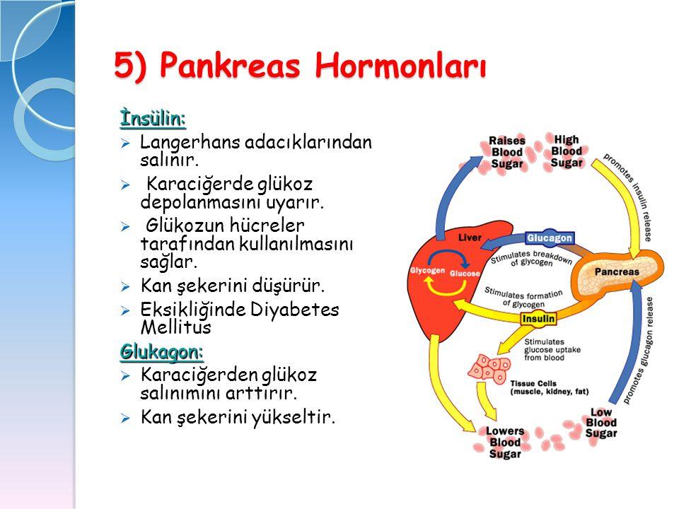5) Pankreas Hormonları İnsülin: Langerhans adacıklarından salınır.