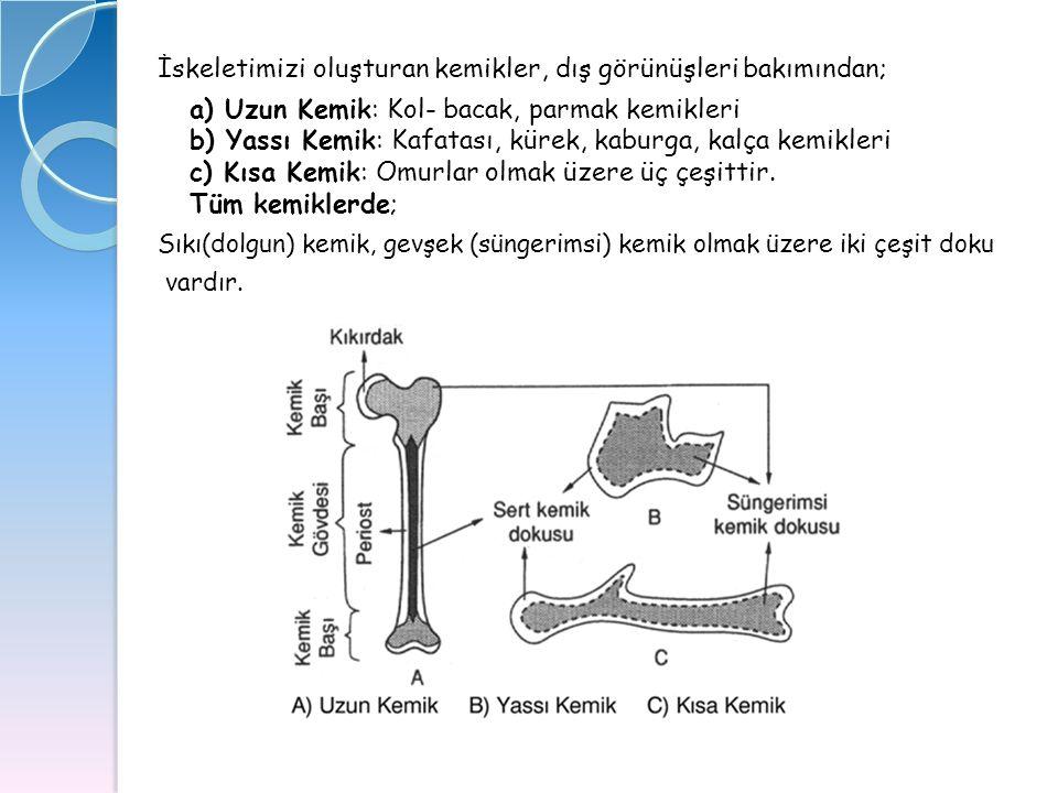 İskeletimizi oluşturan kemikler, dış görünüşleri bakımından;
