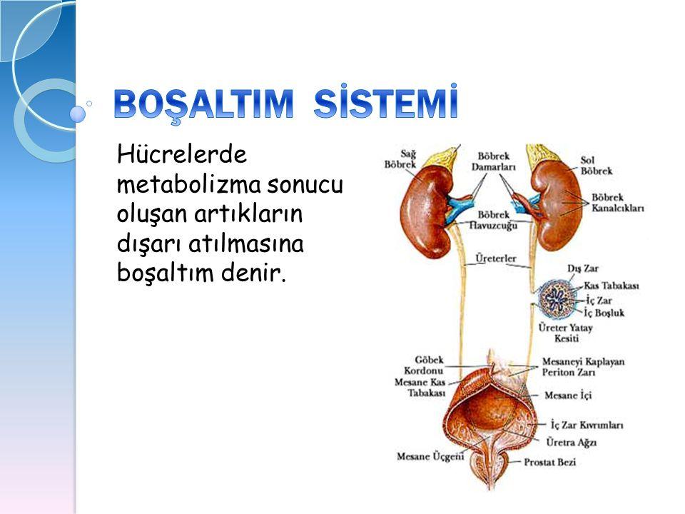BOŞALTIM SİSTEMİ Hücrelerde metabolizma sonucu oluşan artıkların dışarı atılmasına boşaltım denir.