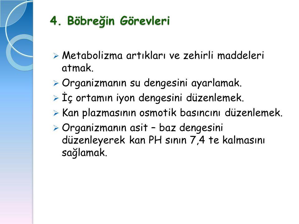 4. Böbreğin Görevleri Metabolizma artıkları ve zehirli maddeleri atmak. Organizmanın su dengesini ayarlamak.