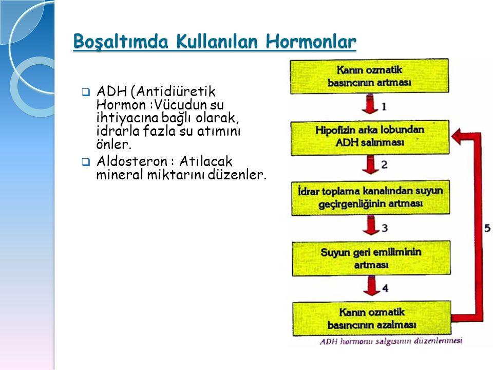 Boşaltımda Kullanılan Hormonlar