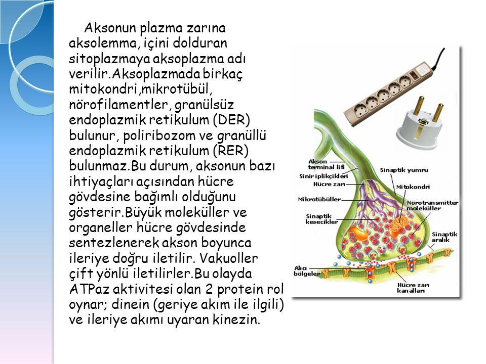 Aksonun plazma zarına aksolemma, içini dolduran. sitoplazmaya aksoplazma adı. verilir.Aksoplazmada birkaç.