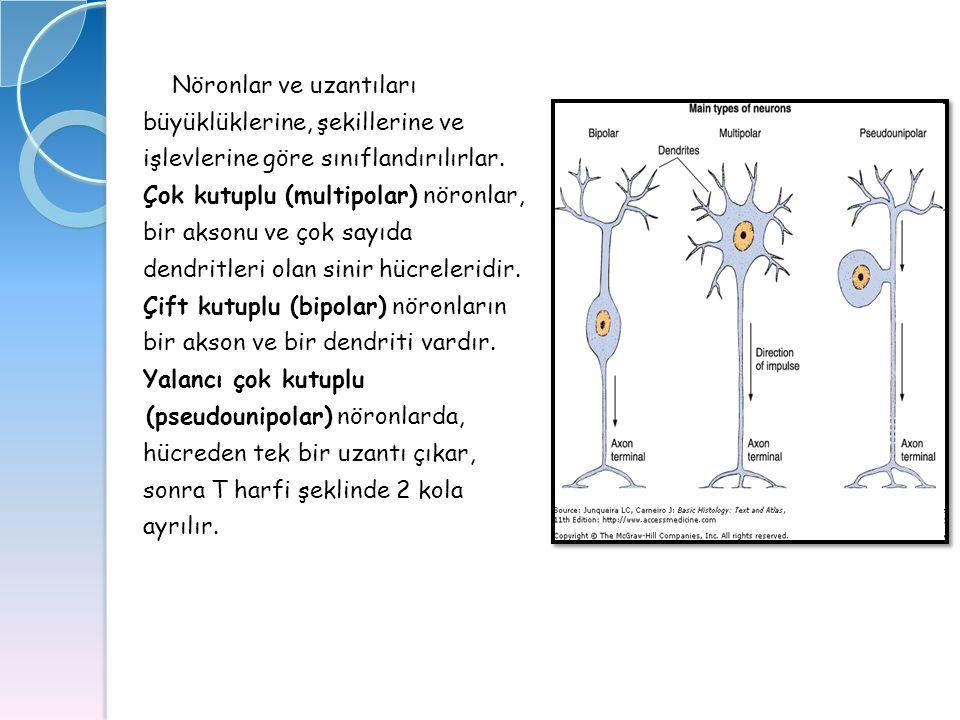 Nöronlar ve uzantıları