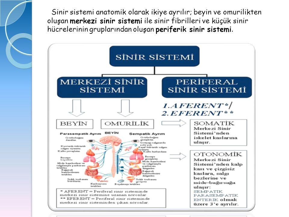 Sinir sistemi anatomik olarak ikiye ayrılır; beyin ve omurilikten oluşan merkezi sinir sistemi ile sinir fibrilleri ve küçük sinir hücrelerinin gruplarından oluşan periferik sinir sistemi.