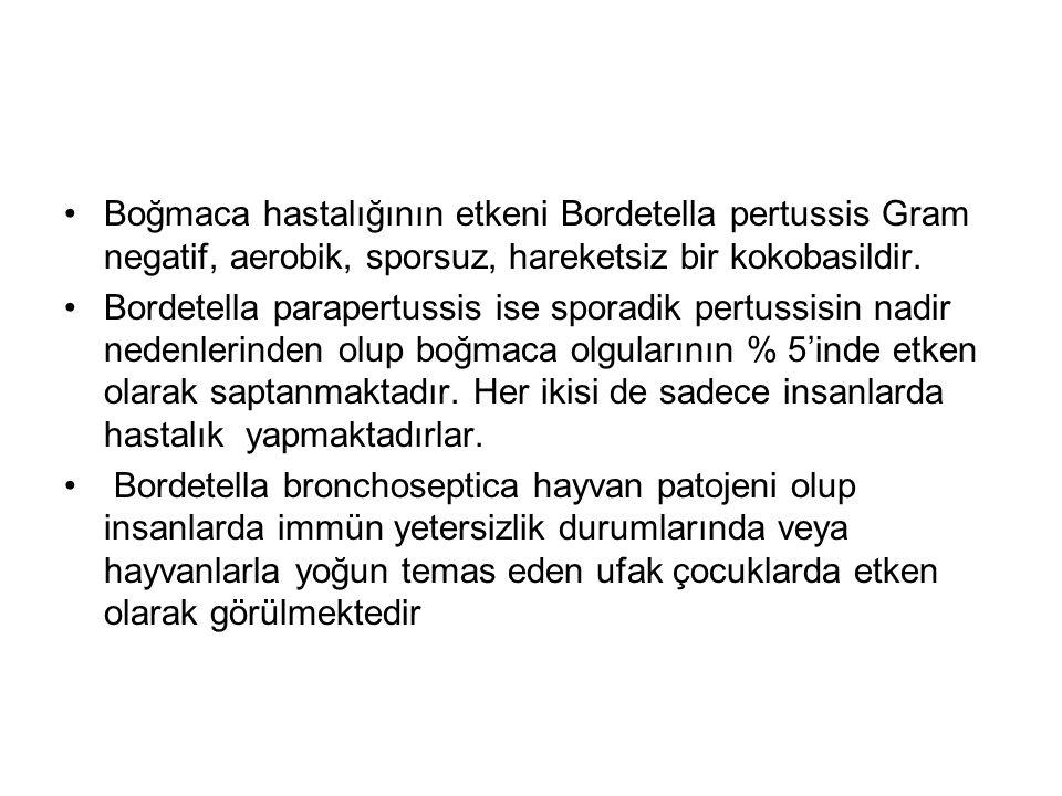 Boğmaca hastalığının etkeni Bordetella pertussis Gram negatif, aerobik, sporsuz, hareketsiz bir kokobasildir.