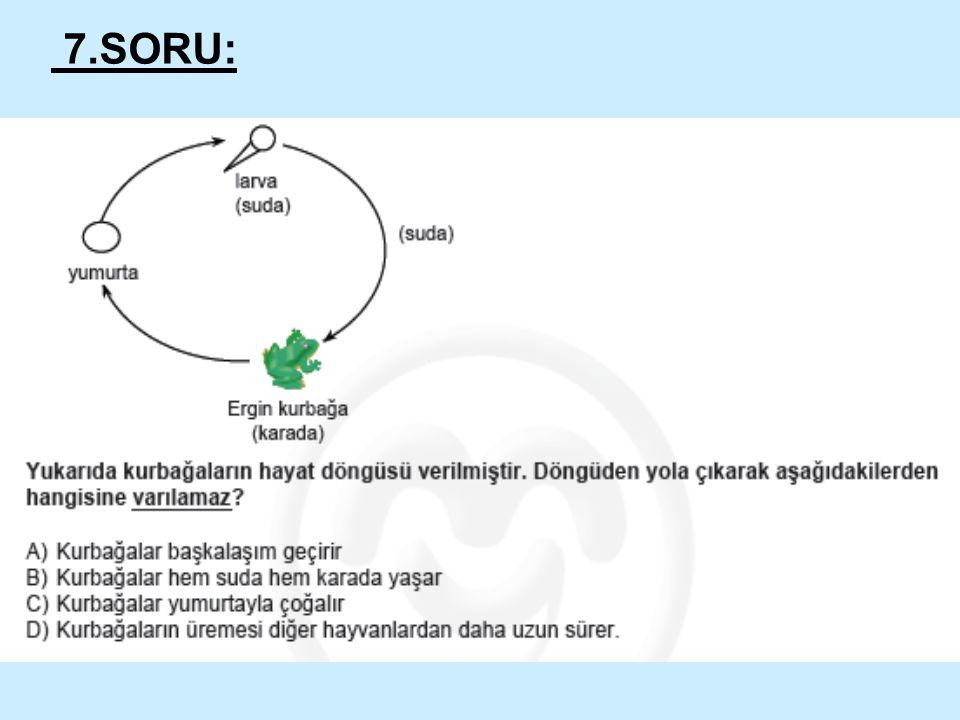 7.SORU: