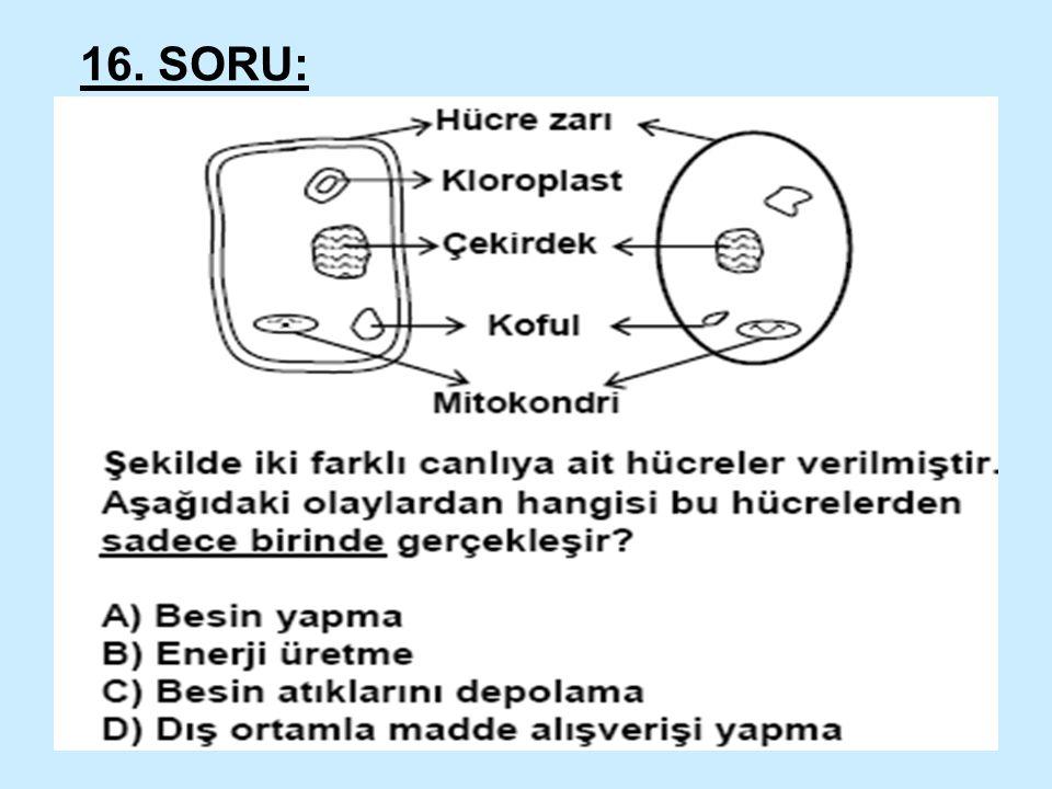 16. SORU: