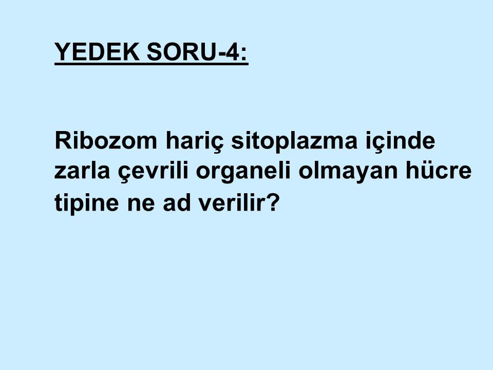 YEDEK SORU-4: Ribozom hariç sitoplazma içinde zarla çevrili organeli olmayan hücre tipine ne ad verilir